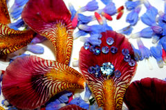 Fotos de los pétalos de la flor, gotas, joyería, pulsera, Fotos de archivo libres de regalías