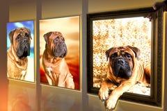 Fotos des Hundes Lizenzfreie Stockfotografie