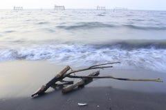 Fotos dos galhos na frente marítima Fotografia de Stock Royalty Free