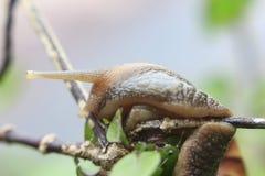 Fotos dos insetos, da natureza e dos animais selvagens Foto de Stock
