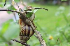 Fotos dos insetos, da natureza e dos animais selvagens Fotografia de Stock
