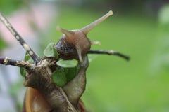 Fotos dos insetos, da natureza e dos animais selvagens Fotos de Stock