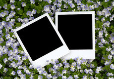 Fotos en fondo floral Fotografía de archivo