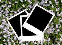 Fotos en fondo floral Foto de archivo libre de regalías