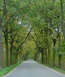 Fotos macras con los árboles ornamentales en el fondo del paisaje, la carretera de la perspectiva fotografía de archivo