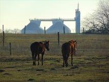 Fotos macro com fundo da paisagem os primeiros dias de Sunny March da mola na exploração agrícola com os cavalos Imagem de Stock Royalty Free