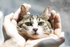 Fotos preciosas de un gato imagenes de archivo
