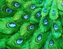 Fotos solamente una mirada exótica del modelo del pavo real del pavo real de la estatua Fotografía de archivo libre de regalías