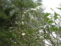 Fotos von Blumen auf dem Hintergrund des grünen Planes, die Mitte der Tropen stockfotos