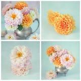 Fotos von schönen Blumen Stockfotos