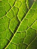 fotosintesi Fotografia Stock