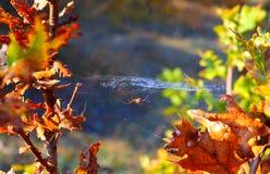 Fotospin met spinneweb in het de herfstbos Stock Fotografie