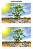 Fotosynthese vector illustratie
