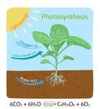 Fotosynthesediagramm Schematische Vektorillustration Lizenzfreies Stockbild