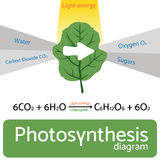 Fotosynthesediagramm Schematische Vektorillustration des fotosynthetischen Prozesses Stockfotos