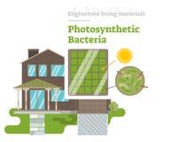 Fotosynthetische Bacteriën - Gebouwd het Leven Materiaal Royalty-vrije Stock Afbeelding