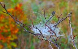 Fototak in het Web en de dauw op de achtergrond van de herfstbos Stock Foto's