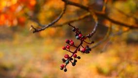 Fototak met bessen op een achtergrond van de herfstbos Stock Foto