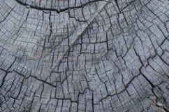 Fototextur av ett träd Arkivfoto