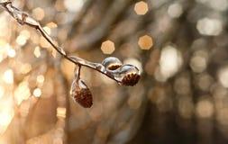 Fotoväxter som frysas av frost Arkivbild