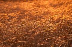 Fotoväxter som frysas av frost Royaltyfri Bild
