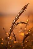 Fotoväxter som frysas av frost Arkivfoto