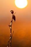 Fotoväxter som frysas av frost Royaltyfria Bilder