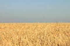 Fotoweizenfeld und -himmel in der Form und in der Farbe der ukrainischen Flagge Stockfotografie