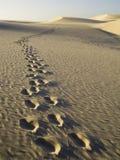 fotspår arkivfoton