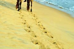 fotspår Royaltyfria Bilder