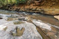 Fotspår av dinosauriecarnotaurusen på den jordnear strömmen på den Phu Faek medborgaren Forest Park, Kalasin, Thailand Loggat in  Arkivbild
