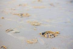 Fotspår av hästen på sand arkivbild