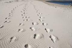 Fotspår för öken för sand för hav för blå himmel för sommarsol arkivbild