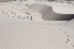 Fotspår för öken för sand för hav för blå himmel för sommarsol royaltyfria foton