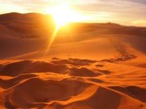Fotspår för sanddyn Royaltyfria Foton