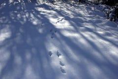 Fotspår i den snöig skogen i vinter Djuren lämnade spårar i den snöig skogen i vinter arkivfoton
