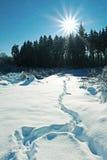 Fotspår i den soliga skogen Royaltyfri Bild