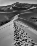 Fotspår i Sahara Royaltyfri Fotografi
