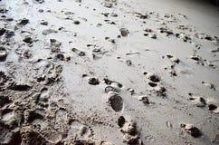 Fotspår i sand Fotografering för Bildbyråer