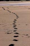 Fotspår i sand royaltyfri foto