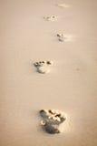 Fotspår i sand Royaltyfri Fotografi