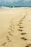 Fotspår i sand på strand från man & husdjur förföljer Royaltyfri Fotografi