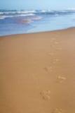 Fotspår i sand på stranden som leder in mot havet Arkivbild