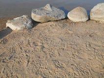 Fotspår i sandanden tafsar Royaltyfri Bild