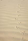Fotspår i sanden av en fågel Royaltyfri Fotografi