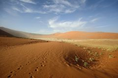 Fotspår i sanden på Dooievlei Royaltyfria Bilder