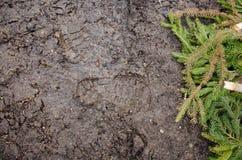 Fotspår i smutsen Brun vägsmuts med fotspår Bakgrundsfototextur Fotfläck på djungelslingan shoeprints i Royaltyfria Foton