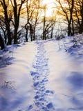 Fotspår i snow Fotografering för Bildbyråer