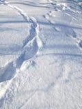 Fotspår i snow Royaltyfria Bilder