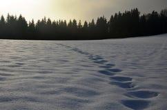 Fotspår i snow Arkivbilder